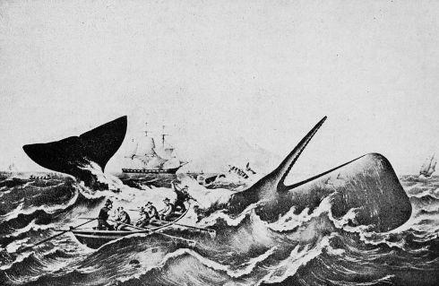 essex baleine